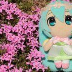 芝桜とミク