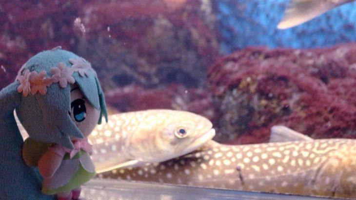 厚岸町の道の駅のプチ水族館でミク
