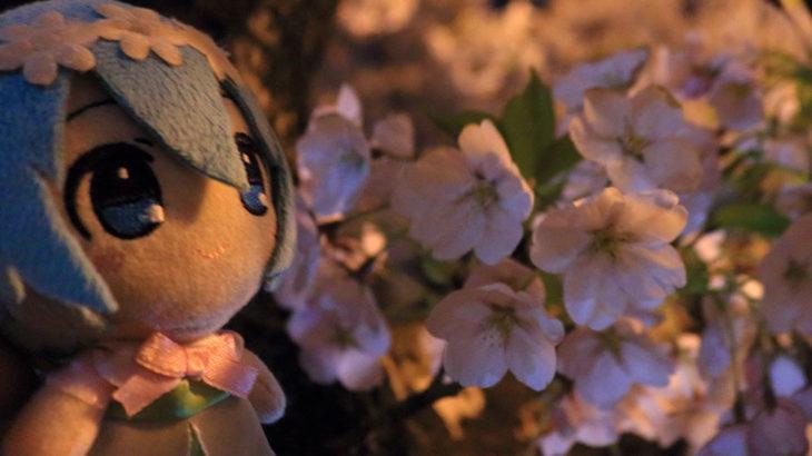 夜桜に想うミク