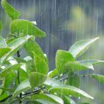 Summer Rain (初音ミクV4X/カバー)