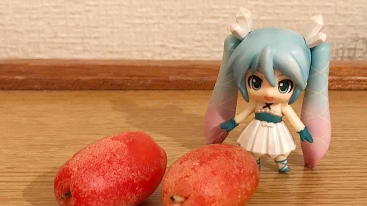 みくりすたる☆さんはグミの実を食べました